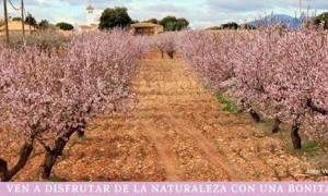 II Ruta Fotográfica de la Floración del Almendro